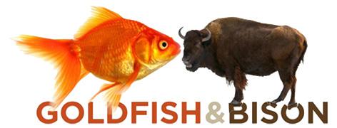 Official Goldfish & Bison logo