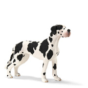 A Female Great Dane Toy Figure from Schleich
