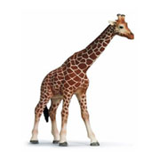 Safari Toy Figure - Giraffe from Schleich